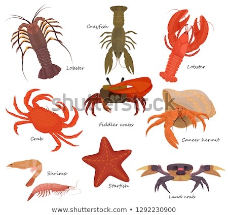 Crustacean Stock photo © trexec
