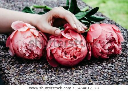 Női kezek elegáns semleges manikűr szög Stock fotó © bezikus