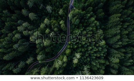 Stock photo: Aerial view from the drone of a landscape view of the coniferous forest and the village in the dista