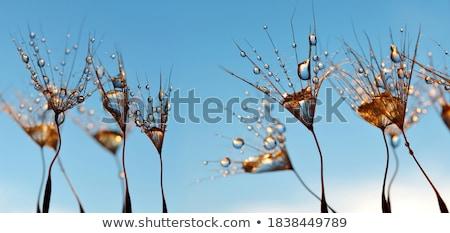 Matin gouttes vue fraîches herbe verte Photo stock © AGorohov