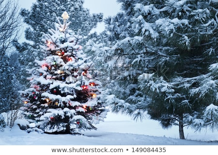 Star outdoor Christmas ornaments Stock photo © IS2