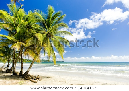 Deserted Island Palm Trees Stock photo © cteconsulting