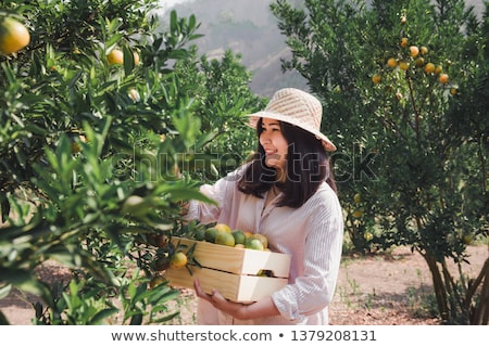 Portrait of Attractive Farmer Woman is Harvesting Orange in Organic Farm, Cheerful Girl in Happiness Stock photo © galitskaya