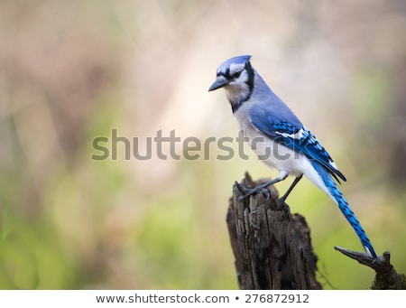 Blauw geïsoleerd witte natuur vogel veer Stockfoto © shawlinmohd