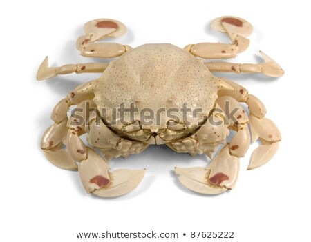 Moon Crab In White Back Photo stock © PRILL