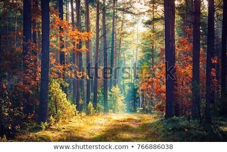 jesienią · lasu · drogowego · czerwony · pozostawia · słońce - zdjęcia stock © chrisroll