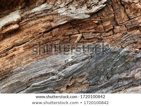 Background - brown rotten tree with cracks Stock photo © pzaxe