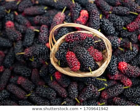 Mulberry Stock photo © LIstvan