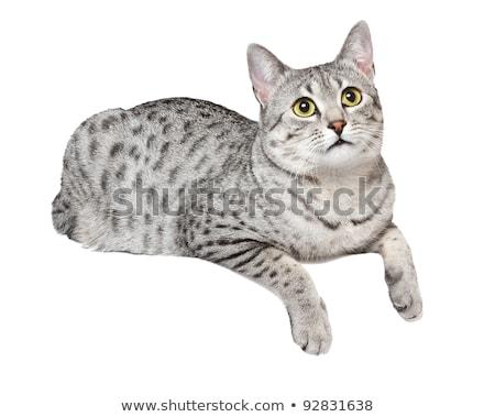 Cat on a Ledge stock photo © rhamm