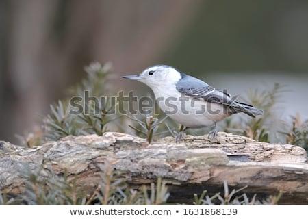 鳥 自然 シード 屋外 ストックフォト © njnightsky