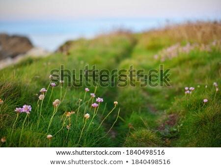 sahil · akşam · pastoral · plaj · su · deniz - stok fotoğraf © prill