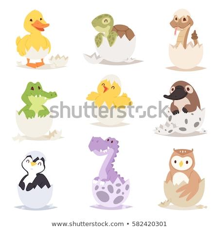 Serpiente bebé serpientes conchas ilustración fondo Foto stock © colematt