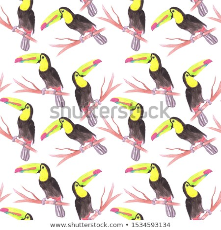 Keel billed Toucan or Ramphastidae sulfuratus bird seamless watercolor birds painting background Stock photo © shawlinmohd