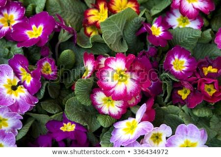 kolorowy · wiele · ogród · narzędzia · odizolowany · biały - zdjęcia stock © chrisroll