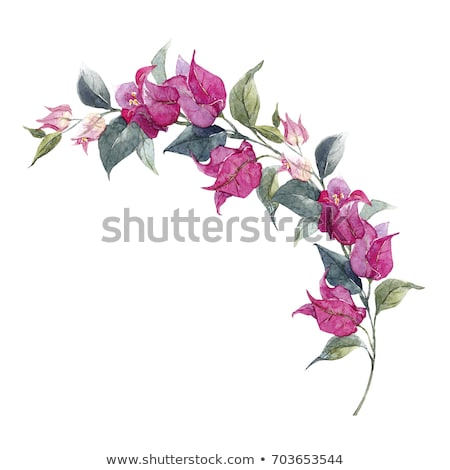 Flowering bougainvilleas Stock photo © ElinaManninen