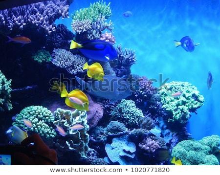 Farbenreich Aquarium Fische hellen Wasserfarbe Illustration Stock foto © ConceptCafe