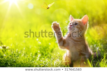 art happy kitten; Cute cat plays with a butterfly Stock photo © Konstanttin