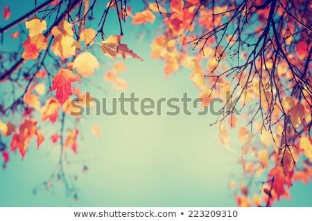 colorful fall autumn park stock photo © photocreo