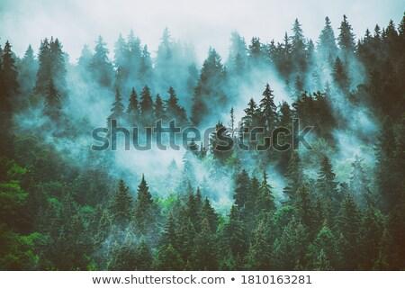 лес Запад небе дерево Сток-фото © Kayco