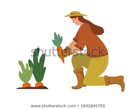 Gazda sárgarépa vektor rajz profi kertész Stock fotó © Vg