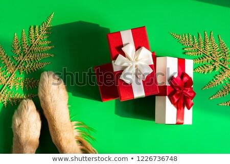 акула шкатулке праздник торговых Рождества Сток-фото © studiostoks