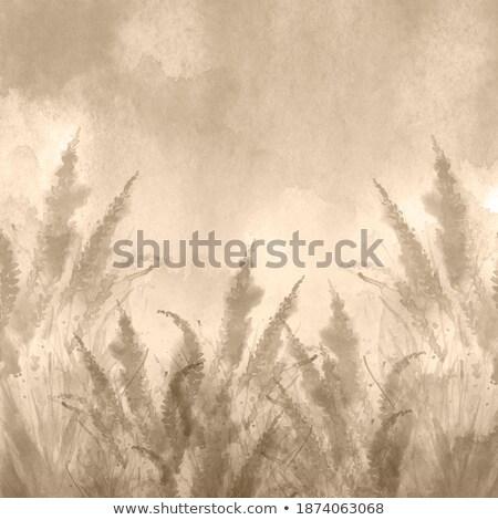 Сток-фото: Полевые · цветы · фотография · карт · стены · рождения · лет