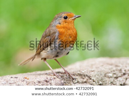 стены зеленый природы птица смотрят живая природа Сток-фото © rekemp