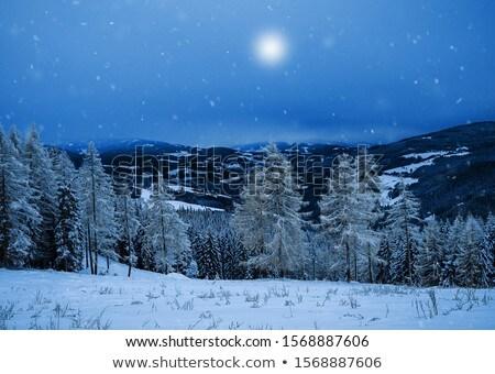 Winter Frozen Tree Stock photo © zhekos