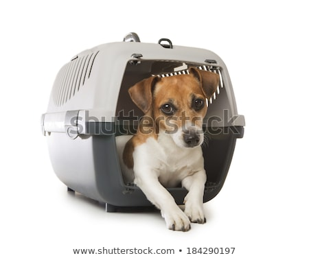 pet carrier in studio Stock photo © cynoclub