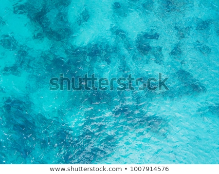Beautiful reef from above Stock photo © lovleah