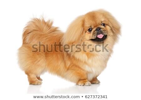 щенков · собака · соломы · корзины · молодые · животного - Сток-фото © cynoclub