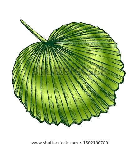 тропические экзотический лист цвета ретро вектора Сток-фото © pikepicture