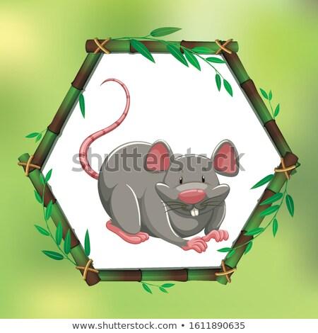 Grigio ratto bambù frame illustrazione design Foto d'archivio © bluering