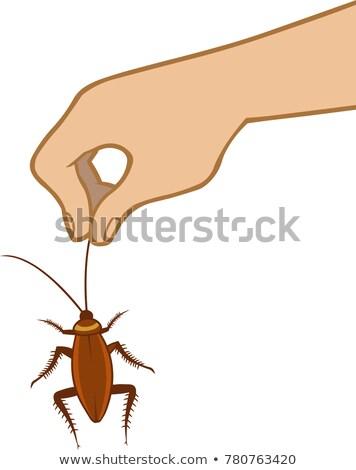 Karikatür el ölü hamamböceği hayvan Stok fotoğraf © tigatelu