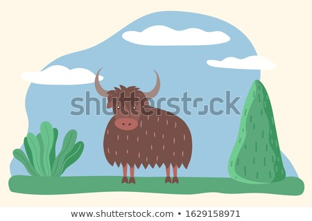Muskox or Bull, Wild Animal Standing on Meadow Stock photo © robuart