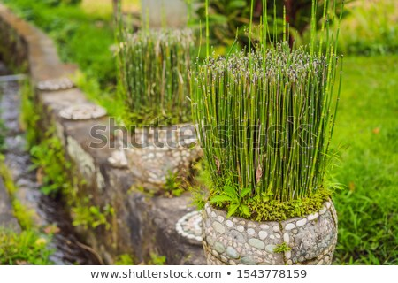 Mały bambusa puli ogród lasu streszczenie Zdjęcia stock © galitskaya
