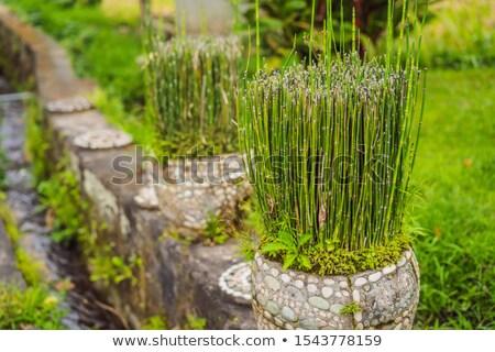 Küçük bambu pot bahçe orman soyut Stok fotoğraf © galitskaya
