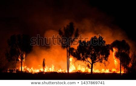 Bush brand milieu vegetatie bos natuur Stockfoto © poco_bw