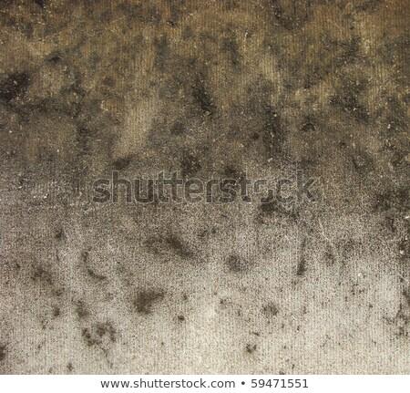 leopard · jak · wzór · brudne · mur - zdjęcia stock © Melvin07
