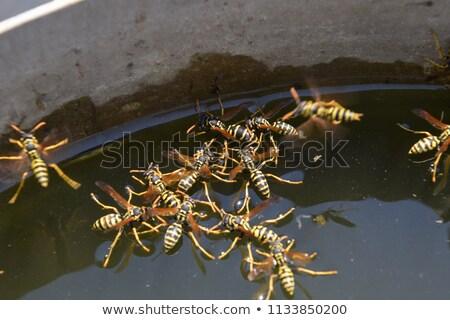 Içme suyu siyah hayvan sarı bacak kanat Stok fotoğraf © Musat