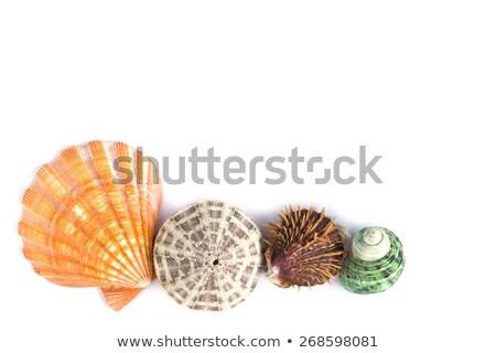 Zee schelpen heldere schone strand achtergrond Stockfoto © luapvision