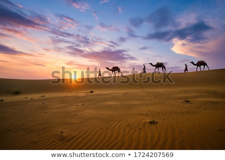 Chameaux sahara désert ciel bleu paysage fond Photo stock © chrascina