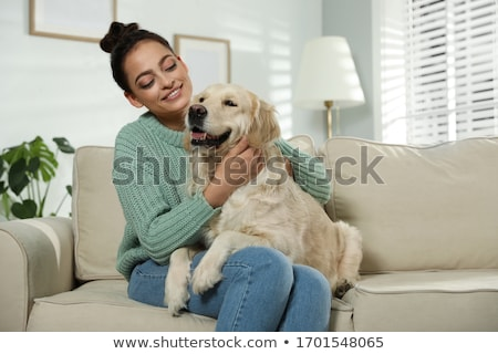 Stockfoto: Golden · retriever · hond · bank · geïsoleerd · witte · dier