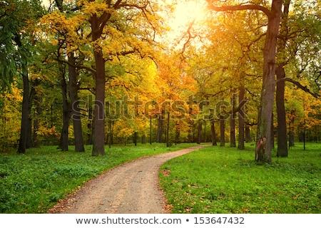 jesienią · spacer · człowiek · objętych · charakter - zdjęcia stock © ca2hill