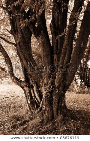 bladeren · gras · najaar · foto · veel · brand - stockfoto © fisfra