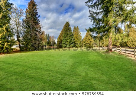 Green large fenced backyard with lawn trees.