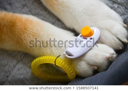 Használt állat képzés hang szerszám műanyag Stock fotó © manfredxy