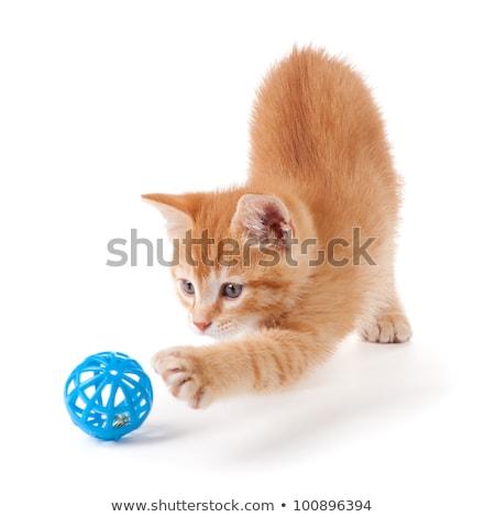 Сток-фото: Cute · оранжевый · котенка · большой · Лапы · белый