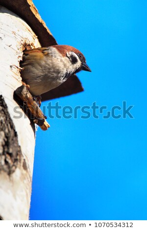 Nesting Box in a Marsh Stock photo © rhamm