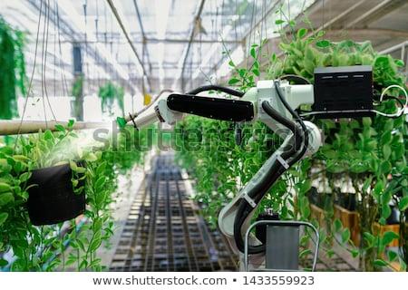 зеленый робота иллюстрация вектора прибыль на акцию Сток-фото © RAStudio